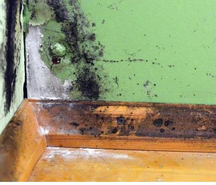 Mold damage on a wall of a home