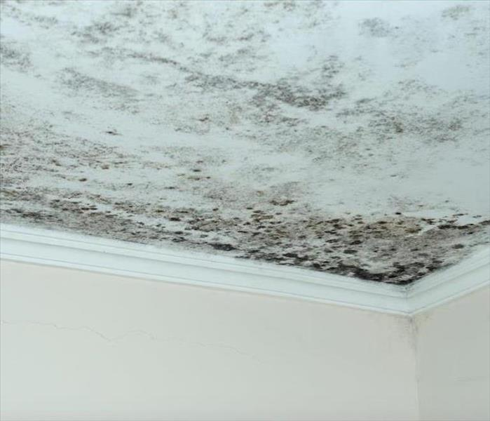 Mold Remediation This Could Hen To You Damage Identification Errors In Little